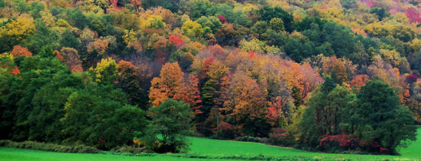 Hills of Holland Fall Foliage @ Horizons Photography